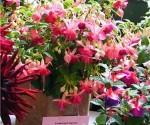 The Trelawnyd Flower Show