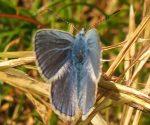 Butterfly surveys